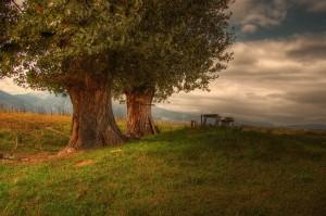 village-tree-1